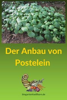 Winterpostelein anbauen Hier erfährst Du, wie Postelein angebaut wird. #garten #postelein #selbstversorger