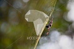 Aranha/Spider by Dina – Moderimage