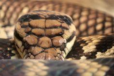 Snake at the Columbus Zoo