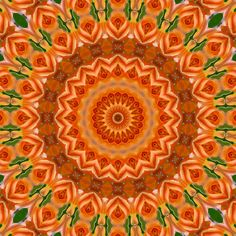 Orange rose mandala