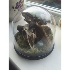 Ethical Curio Dome Available with small animal skull:RabbitMagpieJackdawA Hawkmoth