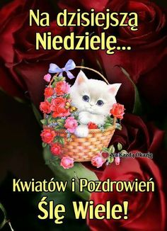 Niech Nowy Tydzień Przyniesie Ci same. Weekend Humor, Grinch, Funny Images, Cats And Kittens, Good Morning, Pictures, Aga, Simply Beautiful, Plants