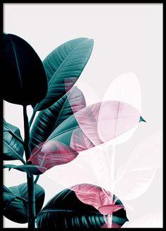 Julisteet | Juliste | julisteita | Posters | Desenio.fi