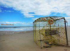 #757 #crabs #seafood #sea #sealife #beach #beachlife #oceanlife #ocean #bay #baylife#cbbt #chesapeakebay #cxb #cxbo #chicksbeach #chix #chixbeachog #chixbeach by chixbeachog