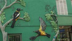 Street art curacao in Willemstad otrabanda Willemstad, Street Art, Bird, Animals, Animales, Animaux, Birds, Animal, Animais