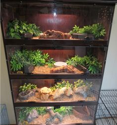 Herp Homes!You can find Reptile enclosure and more on our website.Herp Homes! Reptile Habitat, Reptile House, Reptile Room, Reptile Cage, Lizard Habitat, Terrarium Diy, Terrarium Reptile, Les Reptiles, Cute Reptiles