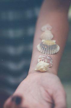lovely sea shells