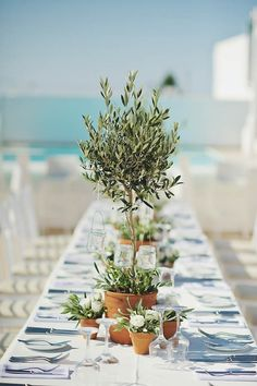 Greenery in terracotta pots & low, wide planters make gorgeous green tablescapes | Image by Thanasis Kaiafas