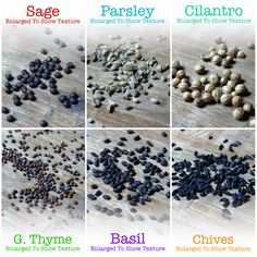 This herb assortment includes some of the most popularly used culinary herb seeds. Collectively offering over 4,000 herb seeds. Open Pollinated & Non-GMO.