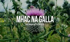 We so need to learn Scottish words ;-) 18 Sweary Scottish Gaelic Words You Need To Use Right Now Scottish Words, Scottish Quotes, Scottish Tattoos, Scottish Gaelic Phrases, Scottish Names, Unusual Words, Unique Words, Beautiful Words, Cool Words