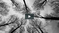 one minute in the German forest in strong winds.