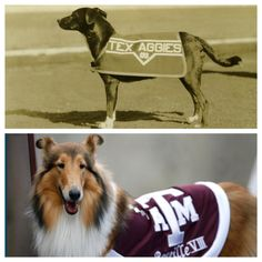 Then and now: Miss Reveille, the First Lady of Texas A&M.