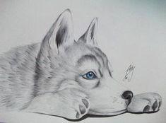 Dibujos de Husky Siberiano - Imagui