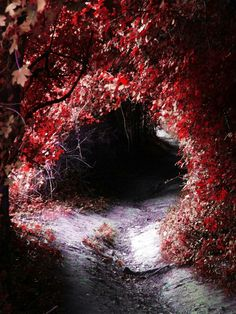 Autumn leaves tunnel