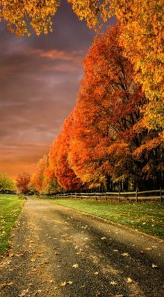 This is the perfect Fall country road.