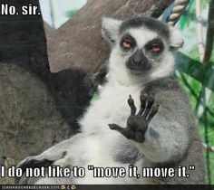 """No, sir. I do not like to 'move it, move it'."" - Totally relatable at the end of #moving day."