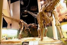 Take a look at the towering dinosaur giants at the Sam Noble Oklahoma Museum of Natural History in Norman.
