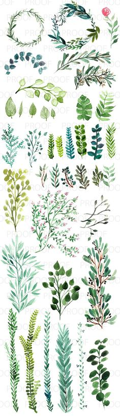 The collection includes wreaths, half wreaths, vines, branches, sprigs, and leaves. beginner watercolor, learn to watercolor, greenery, easy watercolor