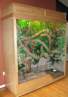 chinese water dragon enclosure - Bing images