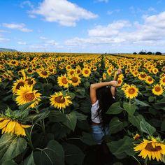 Sunflower Garden, Sunflower Fields, Sunflower Field Pictures, Sunflower Field Photography, Sunflower Wallpaper, Felder, Shooting Photo, Girl Photography, Scenery