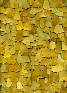 gingko leaves: shape, color, value, texture Patterns In Nature, Textures Patterns, Color Patterns, Organic Patterns, Nature Pattern, Art Patterns, Design Visual, Photocollage, Shades Of Yellow