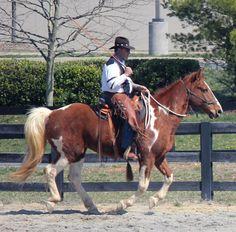 53 Best Spotted Saddle Horse Images Horse Saddles Saddles Paint