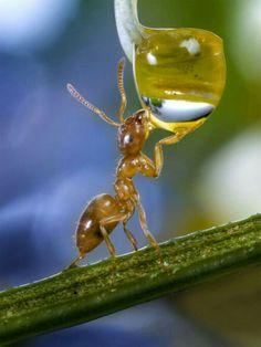 Honey time