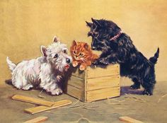 WESTIE & SCOTTISH TERRIER WITH KITTEN LOVELY DOG PRINT
