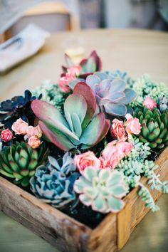 Succulent box. Colorful succulents