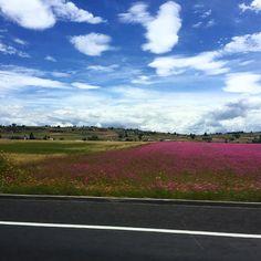 Uno de los miles de paisajes que encontramos en #México: flores silvestres que tiñen de colores el campo. #Caprichos #DelTingoAlTango