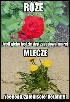 Wtf Funny, Funny Dogs, Funny Memes, Funny Lyrics, Polish Memes, Lol So True, School Memes, Read News, Mtg