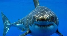 Top 10: Verdens farligste strande