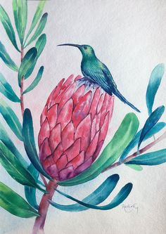 Buy Hummingbird and King Protea, Watercolor by Irina Redine on Artfinder. Discover thousands of other original paintings, prints, sculptures and photography from independent artists. Oil Pastel Paintings, Paintings For Sale, Original Paintings, Protea Art, Protea Flower, Watercolor Flowers, Watercolor Paintings, Watercolours, Floral Drawing