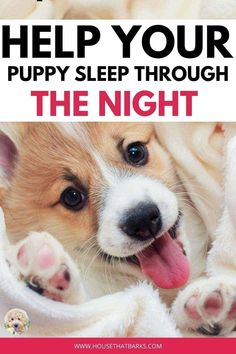 Easy ways to help your puppy sleep through the night. #puppy sleeping Cute Puppies, Cute Dogs, Dogs And Puppies, Doggies, Puppies Tips, Terrier Puppies, Bulldog Puppies, Best Dog Toys, Best Dogs