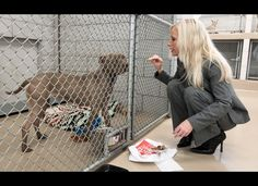 Prada This March 8, 2012 photo shows Nicole Andree feeding a hamburger to her dog, Prada, a 4-year-old pit bull mix, at an animal control facility in Nashville, Tenn. Andree is fighting a lengthy legal battle to save her dog's life after the animal was ordered euthanized for attacking other dogs.