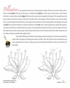 Worksheets: Read Up On Pollination
