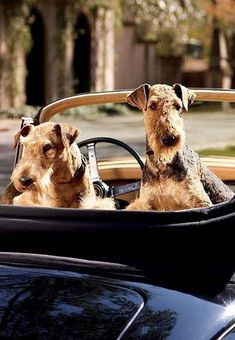 Ralph Lauren offers luxury and designer men's and women's clothing, kids' clothing, and baby clothes. Online Pet Supplies, Dog Supplies, Horse Videos, Preppy Men, Ralph Lauren, Airedale Terrier, Luxe Life, Large Dog Breeds, Dog Houses