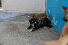 Mama kitty protecting her little monkey