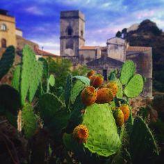La #natura non fa nulla invano - #Nature does nothing in vain - Aristotele  Buy our liqueurs on www.giardinidamore.com #giardinidamore #sentiremediterraneo #feelmediterranean #liqueurs #liquori #italy #mixology #landscape #sicily