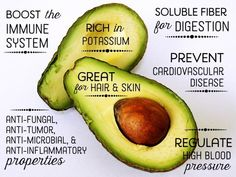 Avocado nutrition and 10 best health benefits Avocado Health Benefits, Coconut Benefits, Lemon Benefits, Stomach Ulcers, Natural Antibiotics, Stop Eating, Carne, The Best, Health Tips