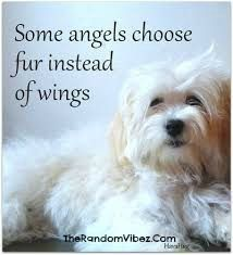 Best Quotes about Dogs being Angels IMages