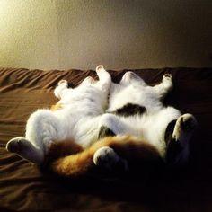 Tough Sleeping Pose of Kitten Couple