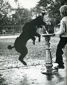 Poodle and water fountain