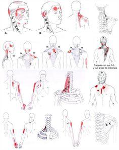 masajes en la espalda puntos claves - Buscar con Google