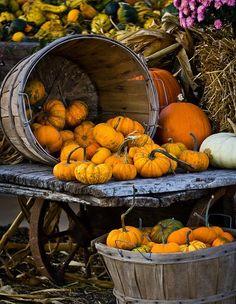 Pumpkin Picking...