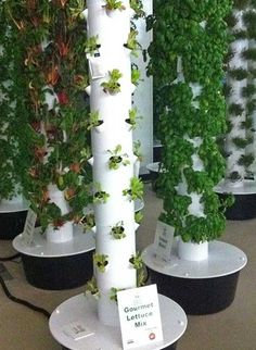aeroponic lettuce and herb growing at Chicago airport. the fertilised water wets the roots inside this tower by spraying a fine mist on the roots. this is all automated and produces food much faster, bigger and tastier than other hydroponic systems. with LED lights, they can grow inside year round. NASA is designing this for space travel.
