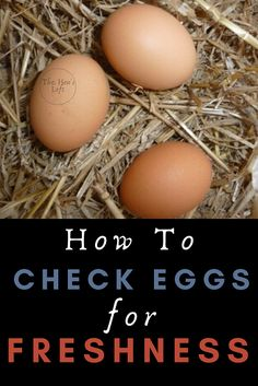 Do you have to store fresh eggs in the refrigerator? How do you safely store eggs that you get from your chickens? Raising Backyard Chickens, Backyard Poultry, Pet Chickens, Rabbits, Chicken Facts, Chicken Quotes, Candling Chicken Eggs, Picked Eggs