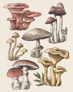 Mushroom Drawing, Mushroom Art, Botanical Drawings, Botanical Art, Arte Sketchbook, Poster Prints, Art Prints, Hippie Art, Art Drawings Sketches