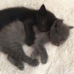 Pretty Animals, Cute Little Animals, Pretty Cats, Cute Funny Animals, Beautiful Cats, Cute Baby Cats, Kittens Cutest, Cats And Kittens, Ragdoll Kittens