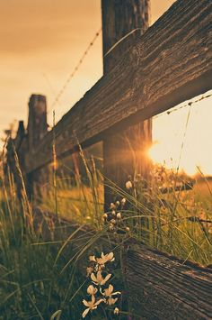 I took a picture like this at my farm once. It is so beautiful. I love the fence!!!